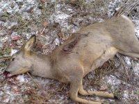 Trial of a poacher in Tuva