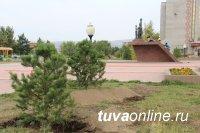 Минусинск подарил Кызылу на 100-летие ели, сосны, березы