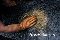 Аукционы на два участка золотодобычи в Туве, организованные Роснедра, не состоялись