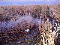 Погибшие утки на озере Убсу-Нур. Фото пресс-службы правительства