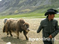 В Монгун-Тайге (Тува) бригады косарей заинтересуют призовым бараном