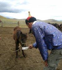 Тува учредит госнаграду для лучших коневодов