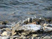 На реках Тувы закрыта навигация