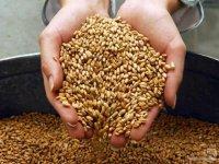 В Туве определены 15 зерноводческих хозяйств, которым будет оказываться господдержка