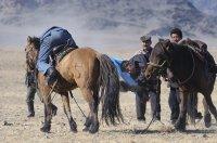 В Туве осуждены скотокрады, угнавшие 5 лет назад скот из Монголии