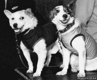 В 1960 году на территории Тувы совершила аварийную посадку ракета с собаками-космонавтами на борту