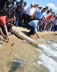 1000 мальков форели из Хакасии начали обживать озеро Торе-Холь (Тува)