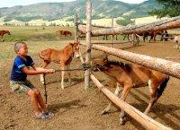 Около 100 школьников Тувы обучились в детском лагере ведению аратского хозяйства