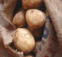 На западе Тувы продолжается уборка картофеля и овощей