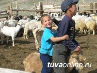 В Туве в разы увеличено количество племенных хозяйств