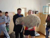 В Улан-Удэ будущий политолог из Тувы выиграл в борцовском турнире барана