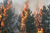 В Туве на лесном пожаре погиб сотрудник авиаотряда