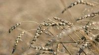 Из-за засухи в Туве готовятся ввести режим ЧС