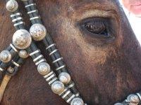 Лошадь Чингисхана в Туве объявлена приоритетом