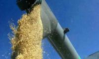 В Туве началась уборка зерновых урожая 2012 года