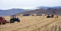 Тувинским аграриям удалось выполнить план по заготовке кормов, несмотря на засуху