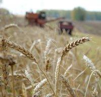 В Туве уборка урожая зерновых культур выполнена на 80%
