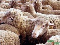 Сут-Хольский фермер получит федеральную поддержку