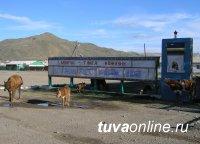 В животноводческой Туве принята Концепция развития сельских территорий