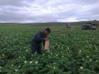 В поселке Каа-Хем (Тува) в качестве защиты от картофельной нематоды вводится карантин