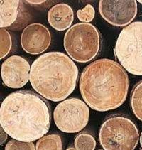 В Туве за счет льготной древесины нарастили темпы индивидуального жилищного строительства