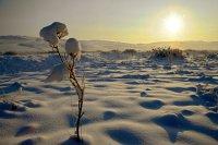 В горной Монгун-Тайге теплее, чем в остальных районах Тувы
