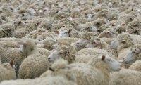 Минсельхозпрод Тувы завершает пересчет поголовья скота