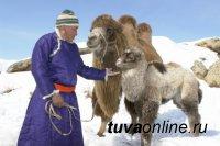 В Туве завершен пересчет скота