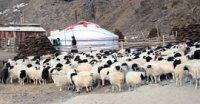 В Туве зимовка скота в целом проходит удовлетворительно