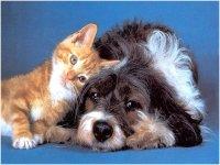 Кошек и собак через тувинско-монгольские КПП можно ввозить без сертификата