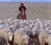 Еще 24 животновода Тувы стали участниками программы поддержки начинающих фермеров