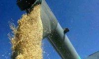 В Туве началась уборка урожая зерновых