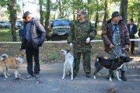 Лайка Алаш стала 3-кратной победительницей выставки собак в Туве