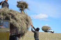 Шесть районов Тувы завершили заготовку кормов