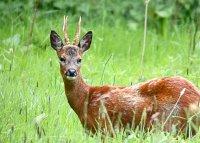 Новогодняя охота обошлась браконьеру в 1,3 млн. рублей