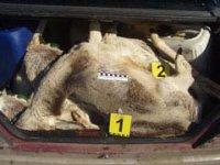 В Туве сотрудники полиции подозреваются в незаконной охоте