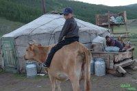 Минсельхоз России на 81 процент софинансирует поддержку аграриев Тувы