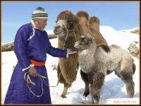 В Туве зимовка скота проходит в штатном режиме