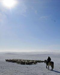 В Туве начинается массовый окот скота. Глава региона побывал на чабанских стоянках