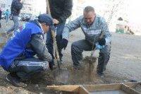 Советы микрорайонов Кызыла помогают в озеленении дворов