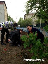 Кызылские власти поощрят активистов по благоустройству и озеленению города, определят «лучшие» и «худшие» дворы и территории