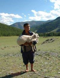 Бурятия в Туве закупает овец