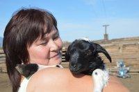 Фермеры Тувы: Чтобы дырочки в сыре были покрасивее...