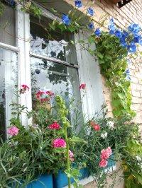 К 100-летию Кызыла: клумба на балконе, бахча - в лоджии