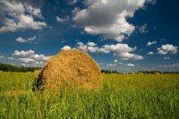 В Туве в кампании по заготовке кормов лидирует Тере-Хольский район