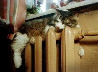 Подача тепла в Кызыле начнется сегодня