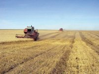 В Туве разворачивается уборка урожая зерновых и кормовых культур