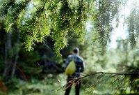 Спасатели нашли потерявшихся в тувинской тайге сборщиков кедровых шишек