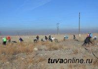 Накануне Дня Народного единства студенты очистили западный въезд в Кызыл от пластика и мусора