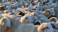 Животноводы Тувы перешли на стойлово-пастбищное содержание скота